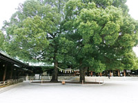 Meiji Shrine Pic.